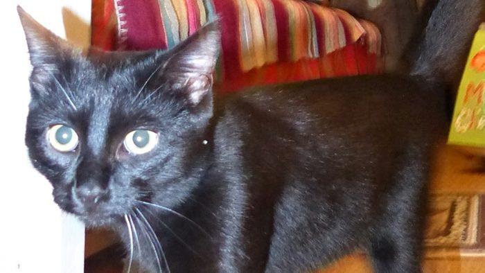 ilustracja przedstawia czarnego kota idącego w prawo na tle kolorowej kapy łóżka