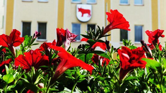 Ilustracja przedstawia rozkwitające kwiaty koloru czerwonego, na tle urzędu miasta. Na urzędzie miasta wisi herb miasta Bielsk Podlaski.
